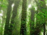 RAINFOREST - Treasure the green moments